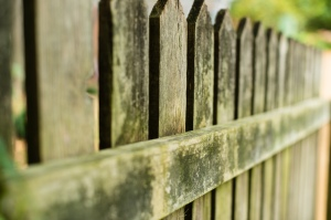 Without fence cleaning, wood can get old and mildewed